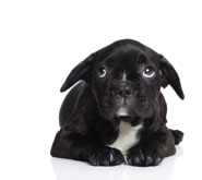 ScaredPuppy