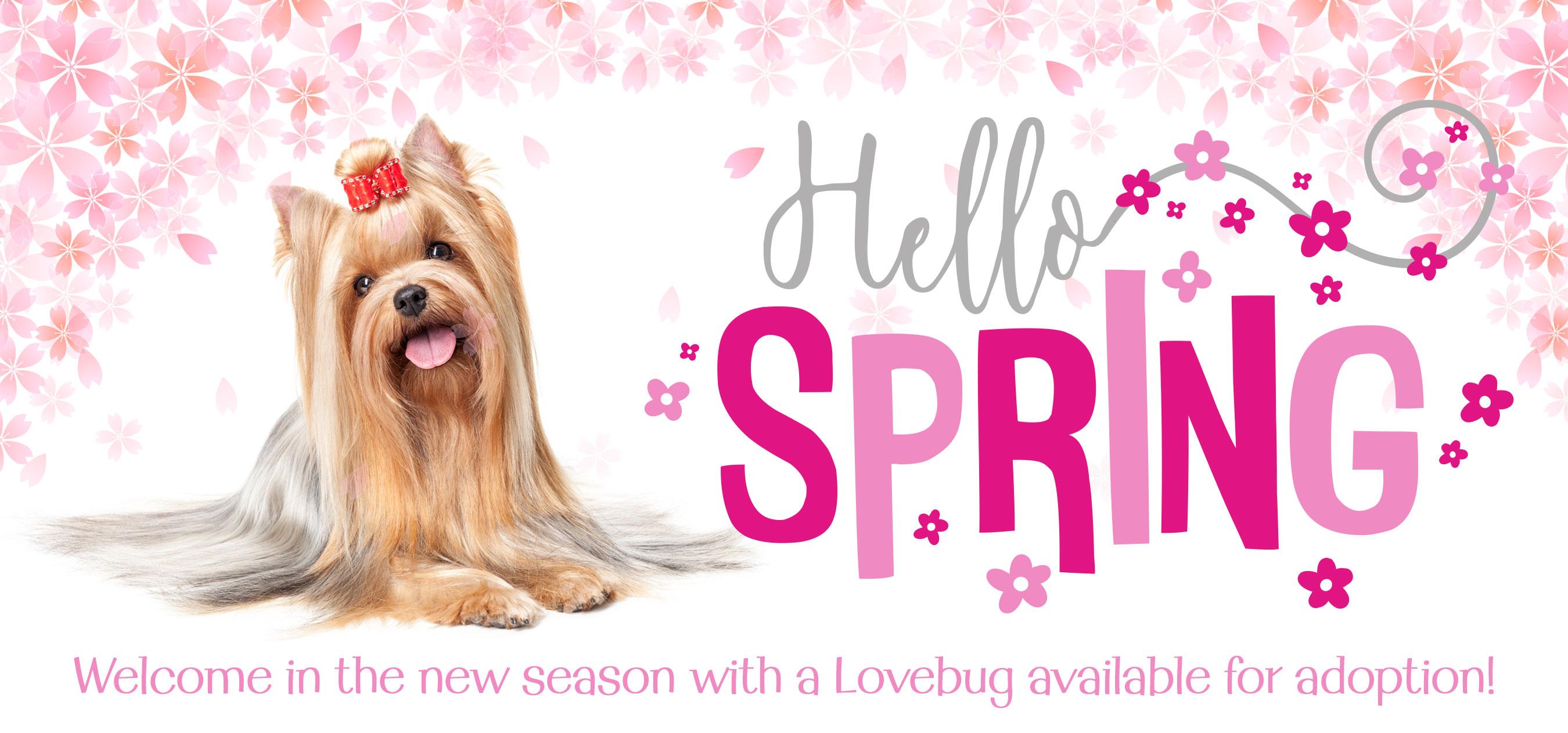 r1 LVBG-072-01 SpringNL2016Header